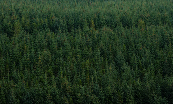 feature-industries-forestry