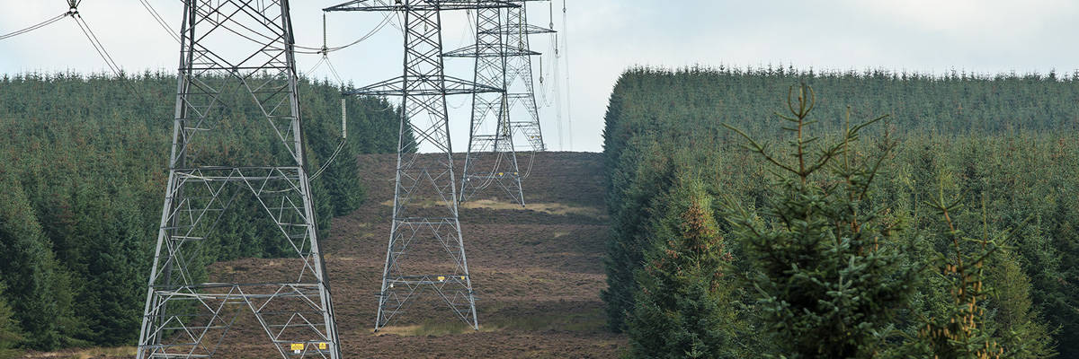 Close up of pylons in powerline corridor cut through forested landscape.