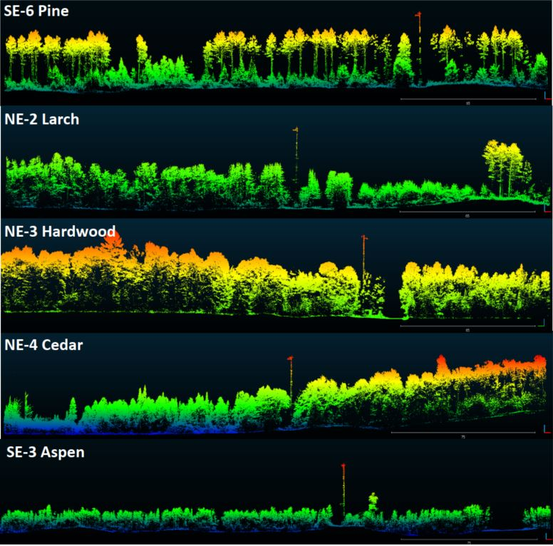 Routescene LiDAR foresty Northern Wisconsin