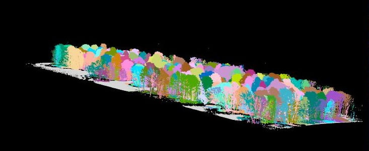 Forest LiDAR scan classified