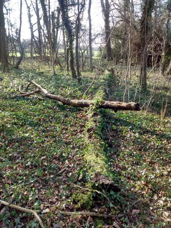 Forest near Barnsley Yorkshire