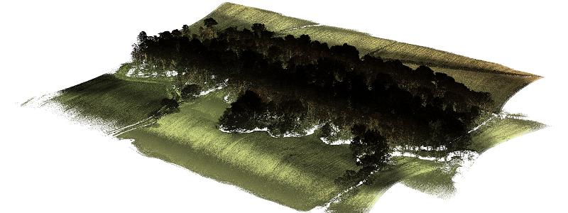 Routescene UAV LiDAR Barnsley forest with trees