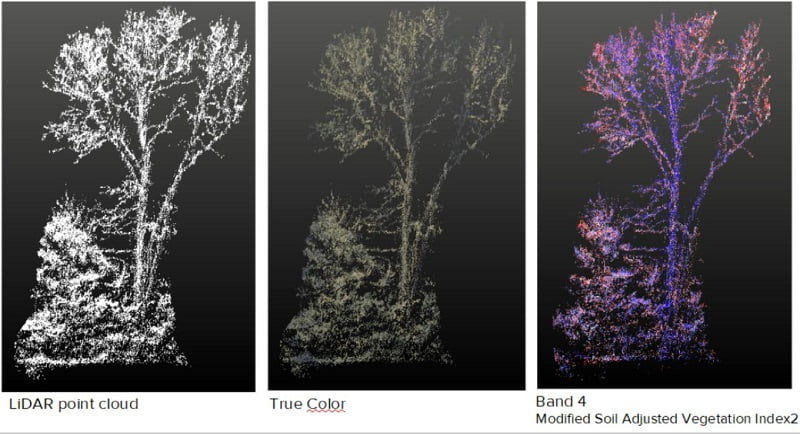 Outputs from the different imaging techniques used - LiDAR, True Color (RGB) and different bands of Multispectral
